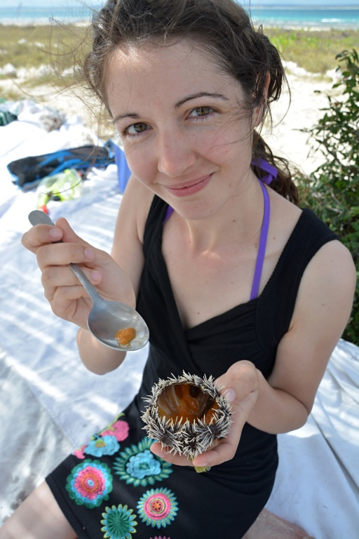 Náš překrm - ježci (sea urchin)