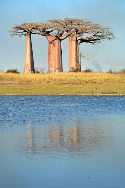 Cestou k zamilovanému baobabu