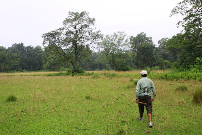 Cesta do lesa a náš průvodce