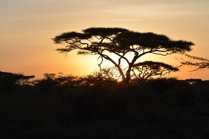 Východ slunce v národním parku Serengeti