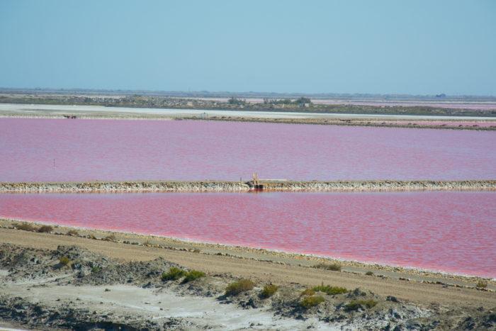 Růžové solné jezero Salin de Giraud